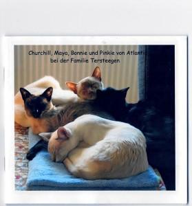 Glückliche-Katzen-Familie